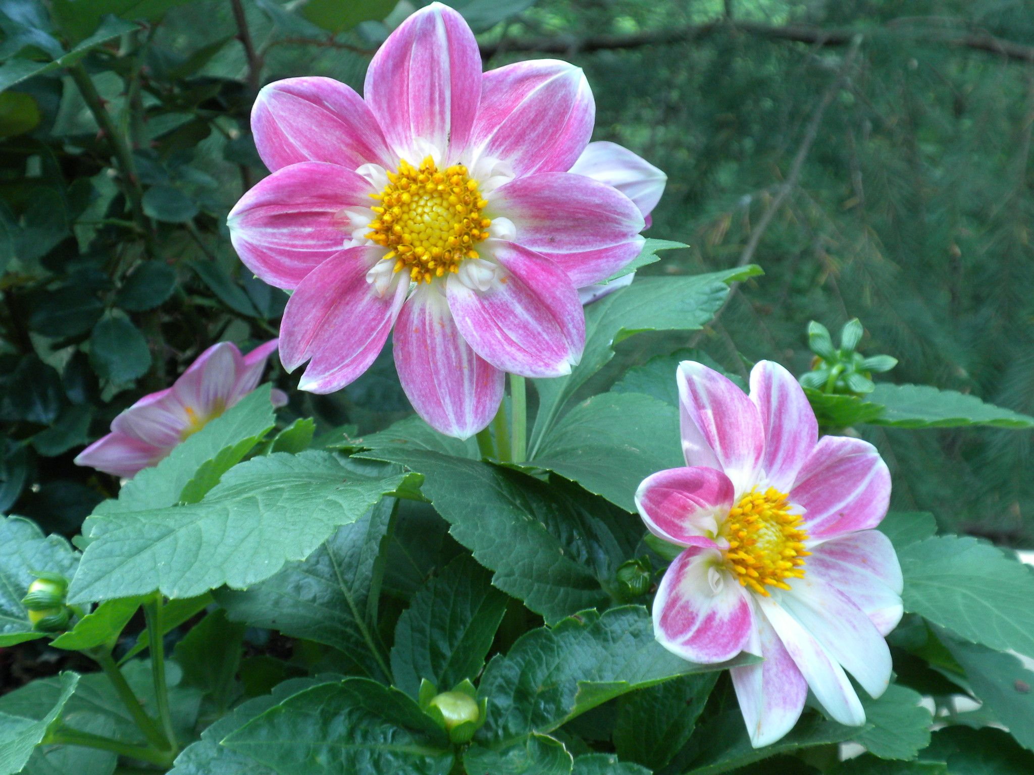 Pink potted flower my photography pinterest flower and photography pink potted flower mightylinksfo