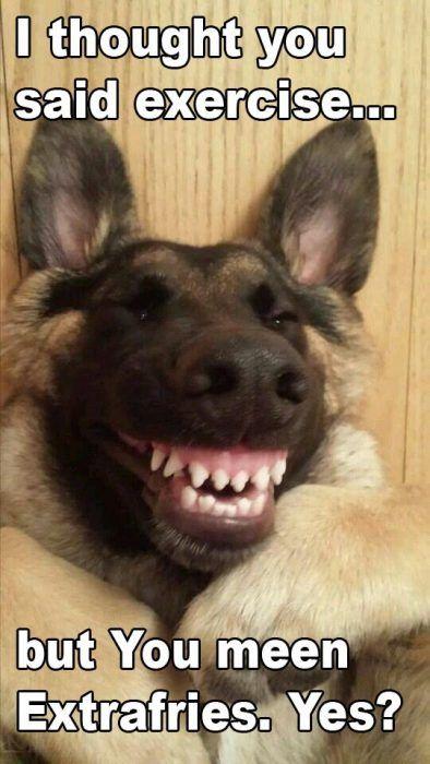 French Fries Funny Animal Jokes Animal Jokes Dog Memes