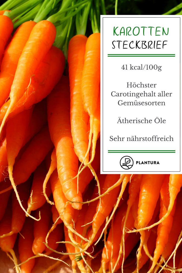 Karotten sind nicht nur beliebt für den Anbau im Gemüsebeet, sie ...