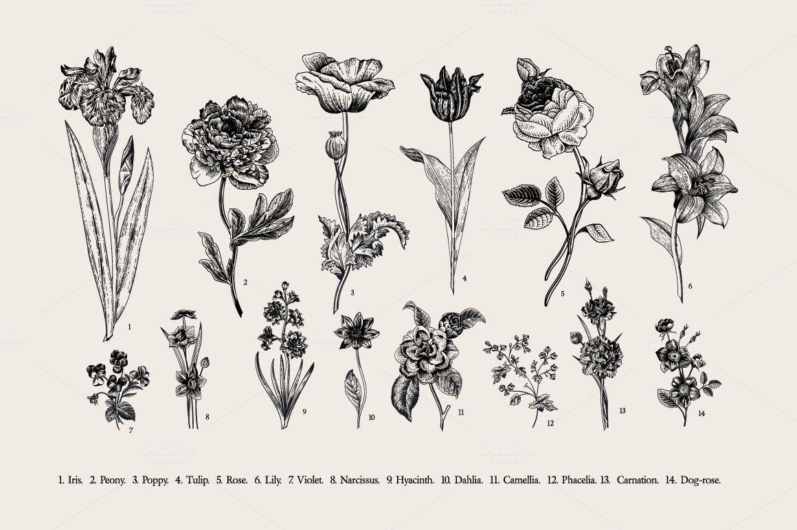 Botany Victorian Garden B W Black And White Flower Tattoo Vintage Flowers Flower Illustration