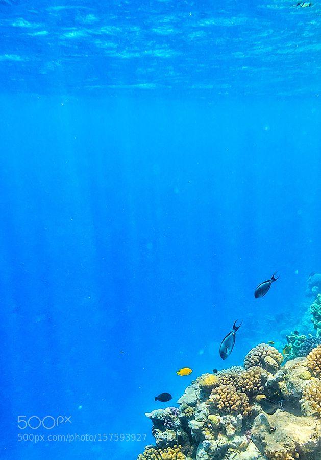 Wonderful and beautiful underwater world with cora by AnastasiaMarkus Underwater Photography #InfluentialLime