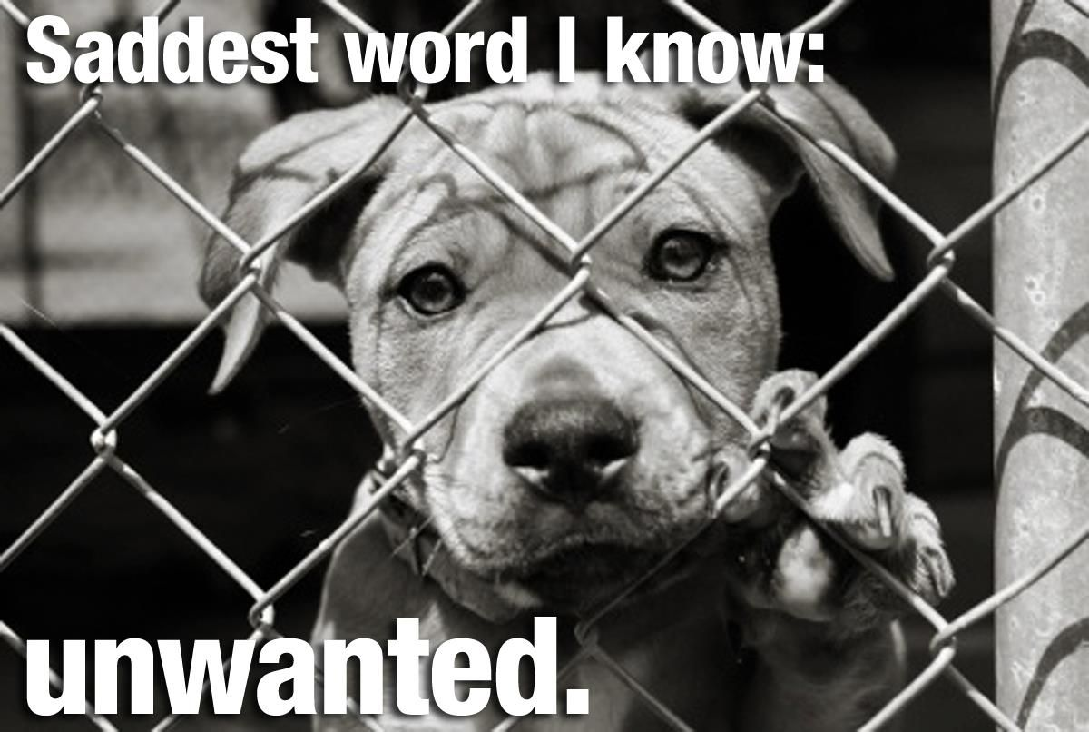unwanted. Shelter dogs