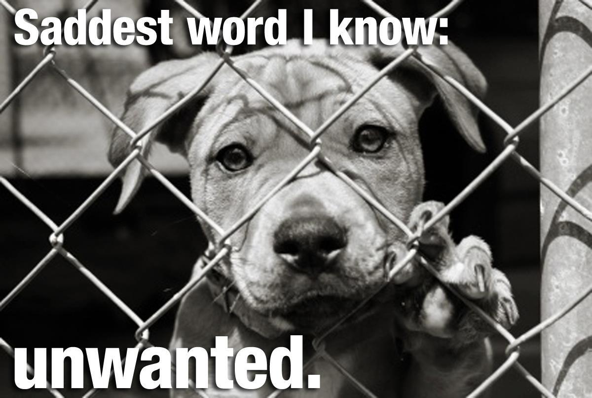 Unwanted Animal Shelter Shelter Dogs Dog Adoption