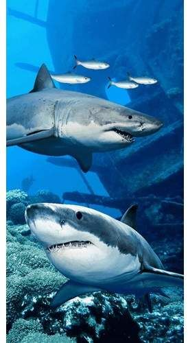 The Beach Collection Shark Endanger Beach Towel