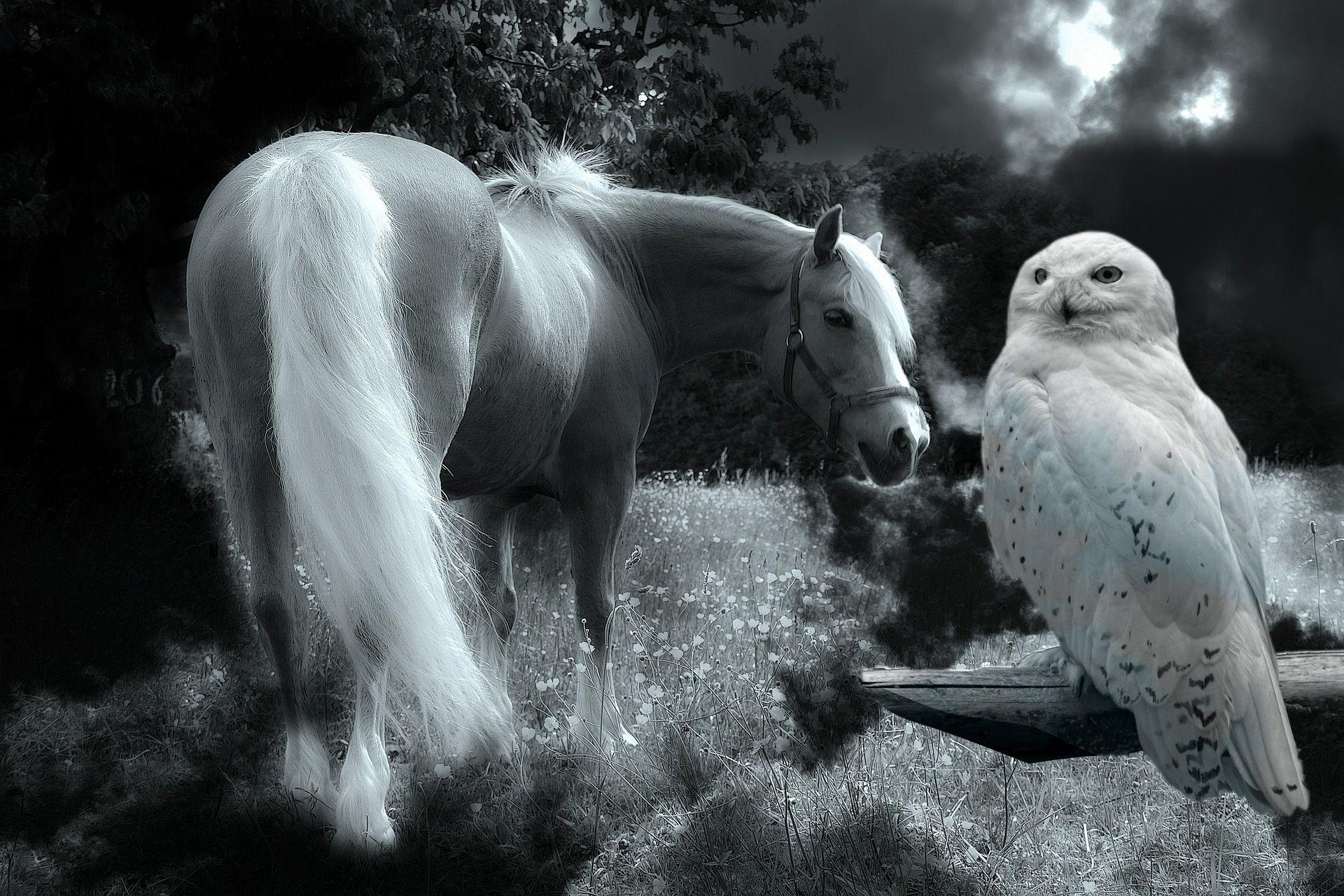 Fusion editing app horse owl nature animals wildlife