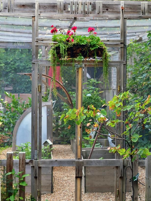 A critter proof greenhouse httpbloghgtvgardenscomhow to