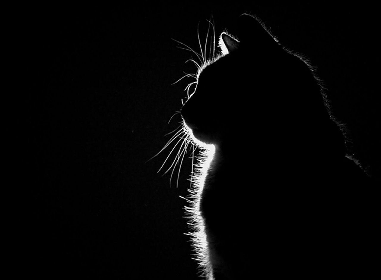 картинки с черными кошками на черном фоне электричку
