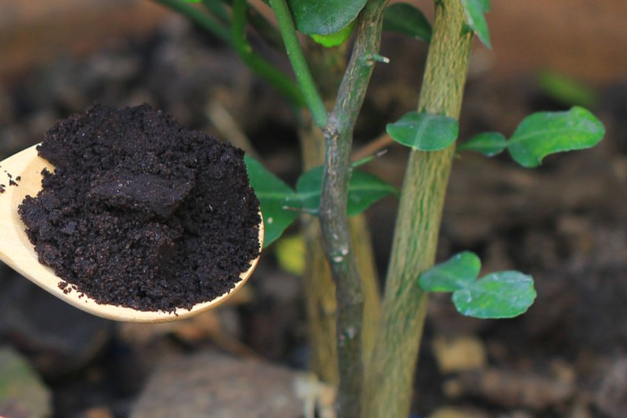 Using Coffee Grounds To Power Your Garden, Flowers, Plants