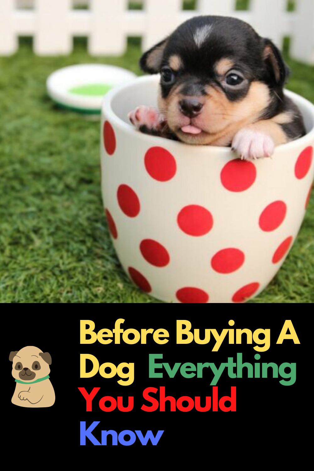 Before Buying A Dog Everything You Should Know In 2020 Puppies Puppy Training Puppy Litter