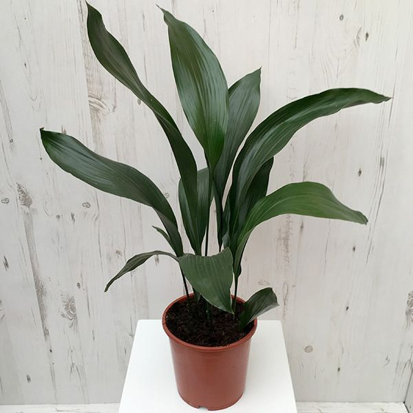 Photo of 5 easy-care indoor plants for your home