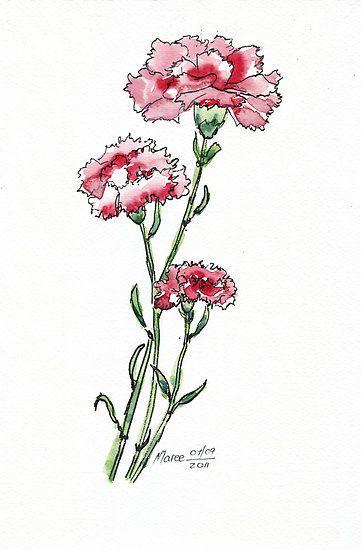 Princess Louise D Orleans Carnation Nelke Water Colour