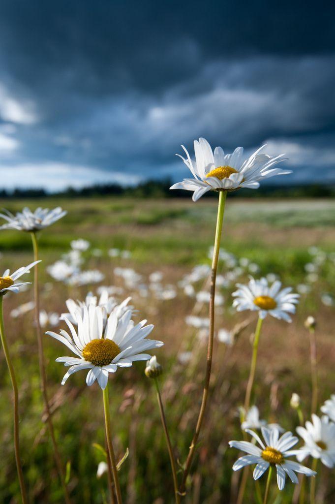 So beautiful #wildflowers