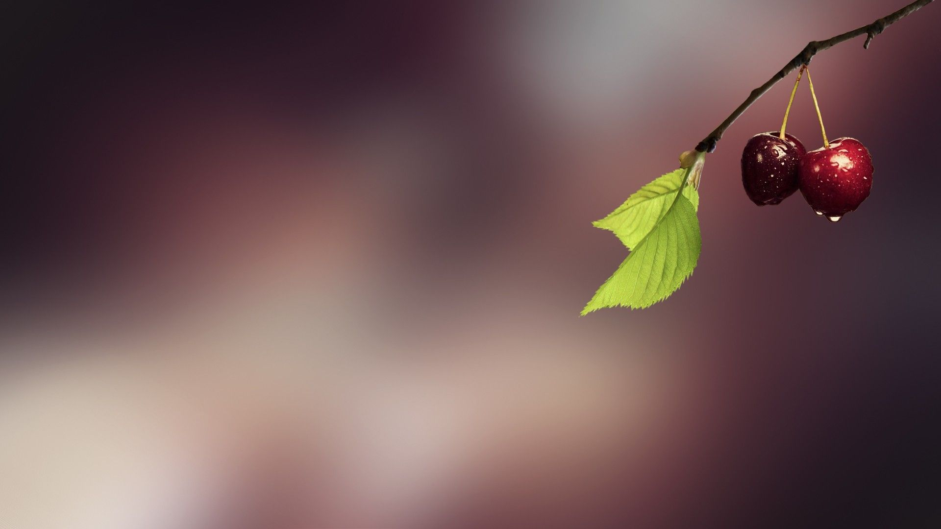 Macro Cherry Hd 1080p Wallpapers Download 1080p Wallpaper
