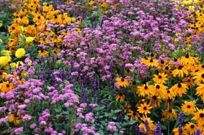 How to arrange a perennial flower bed garden pinterest - The well tended perennial garden ...