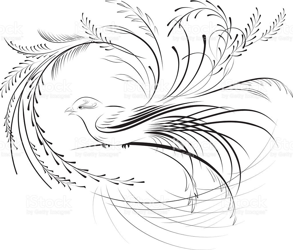 Drawing Lines For Calligraphy : Calligraphy art bird pixshark images galleries