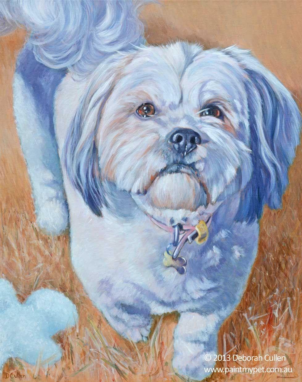 Maltese X Shih Tzu X Dog Portrait Paintmypet Pet Portraits