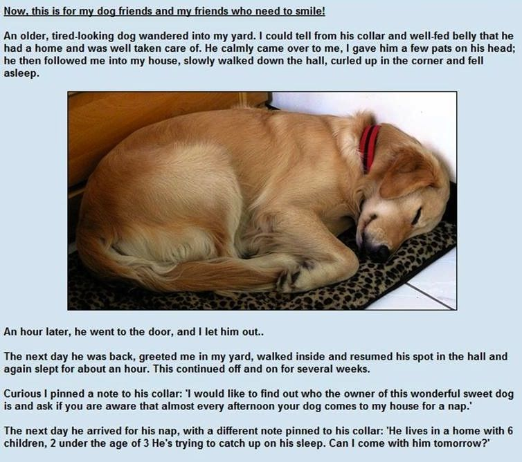 I Love This Story Smart Dog A Golden Retriever Sleeping Dogs
