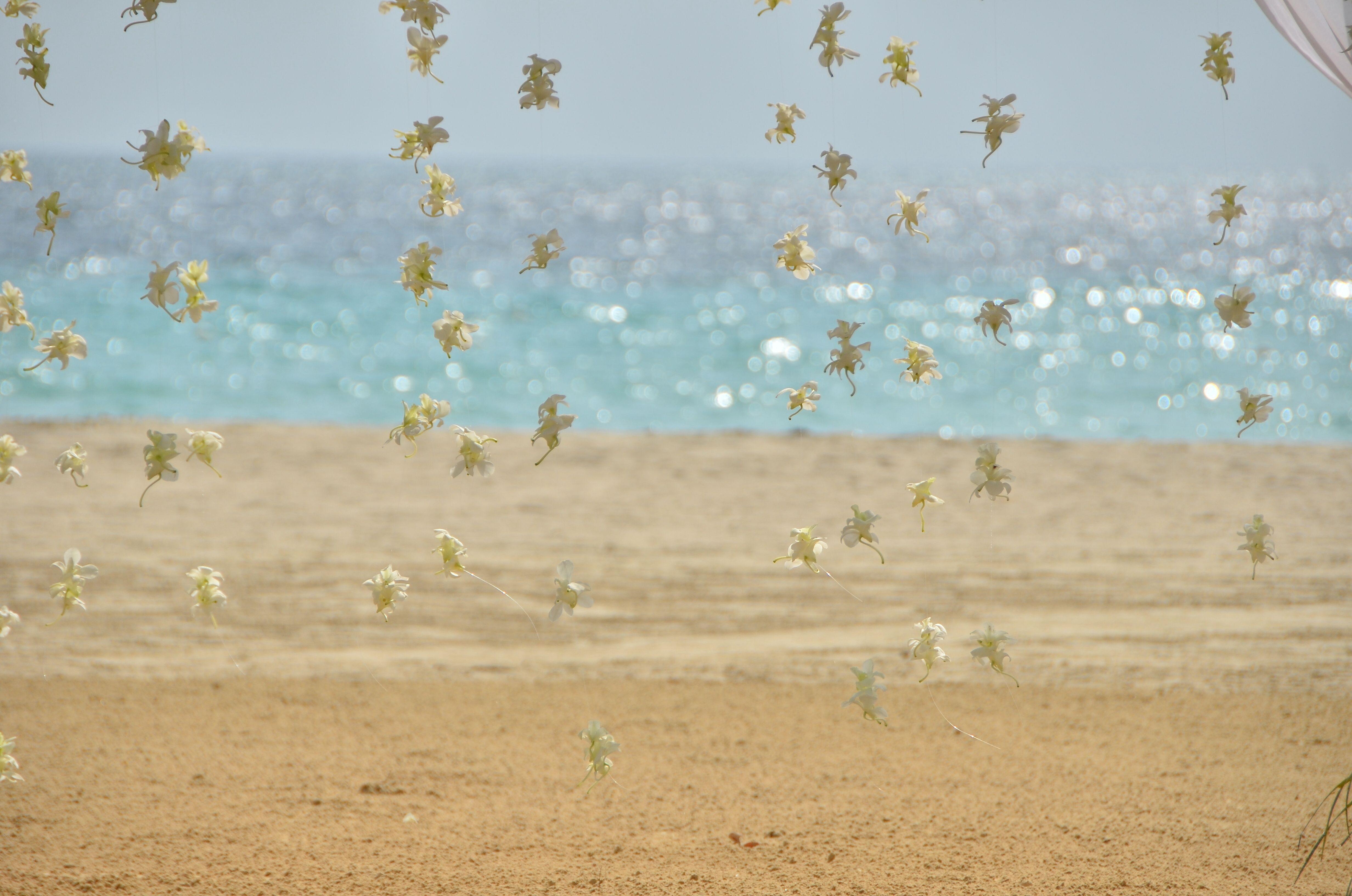 Say #ido #beachwedding #jamaica #hangingorchids