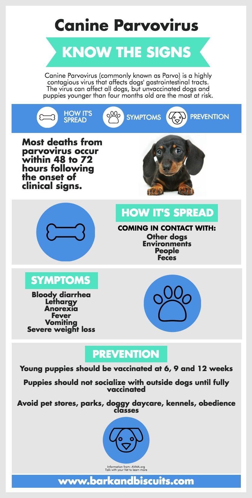 New Puppy Guide Surviving The First 24 Hours Bark And Biscuits Puppy Care Dog Training Obedience Dog Care Tips