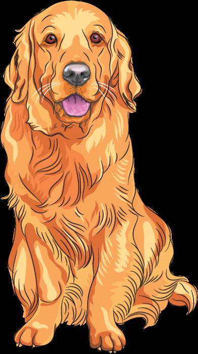 Labrador Retriever Golden Retriever Puppy Dog Breed Dog Golden Retriever Drawing Golden Retriever Art Dog Drawing