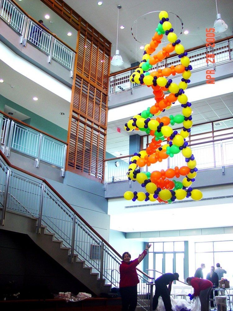 Biology Classroom Decoration Ideas : Three story high balloon sculpture of dna molecule grand