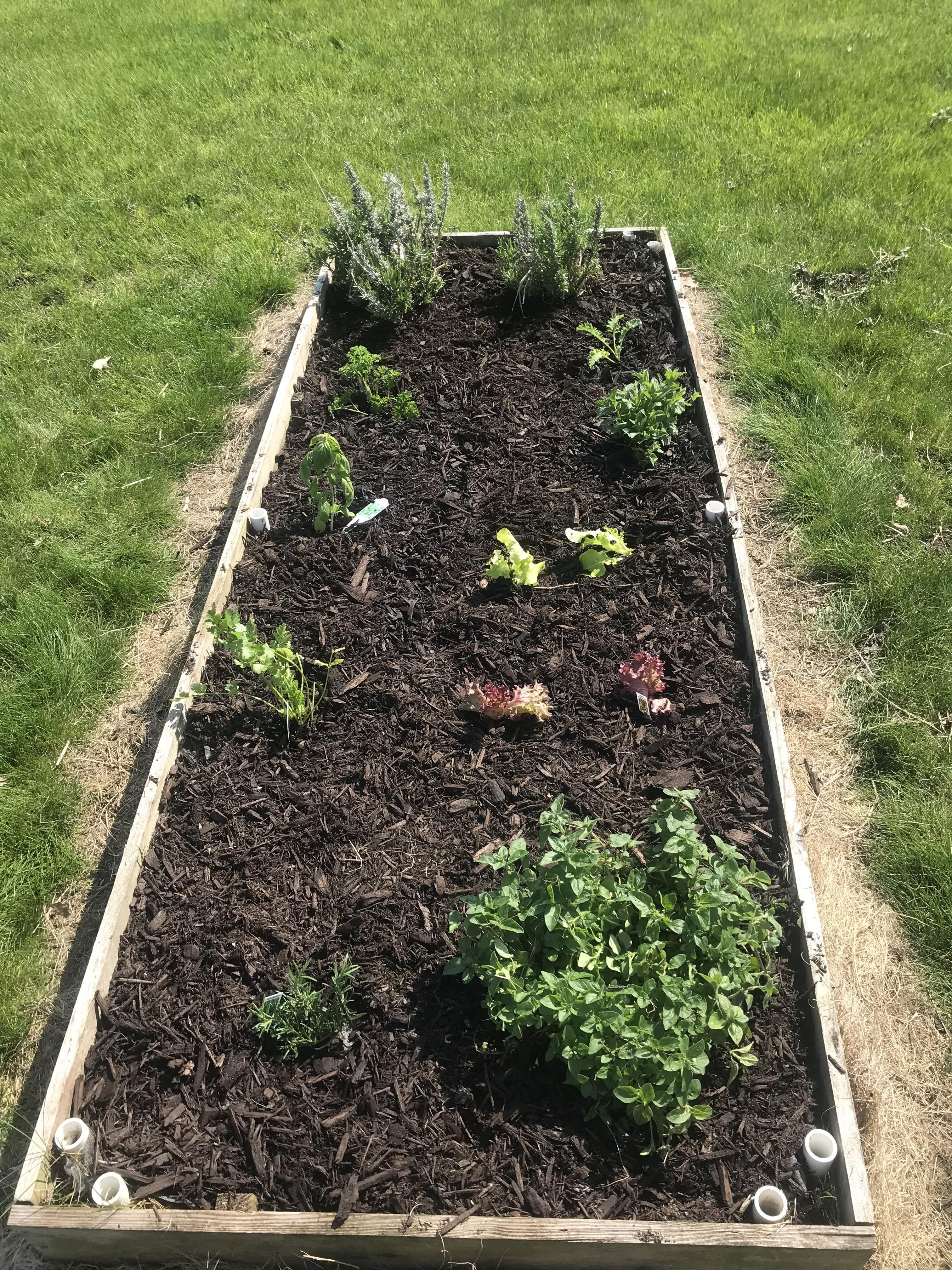 Every Mothers Day I Plant A Little Herb Salad Greens Garden For My