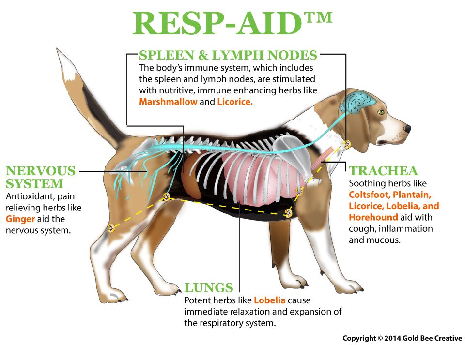 Resp Aid For Dogs Dog Cancer Canine Cancer Pet Insurance Reviews