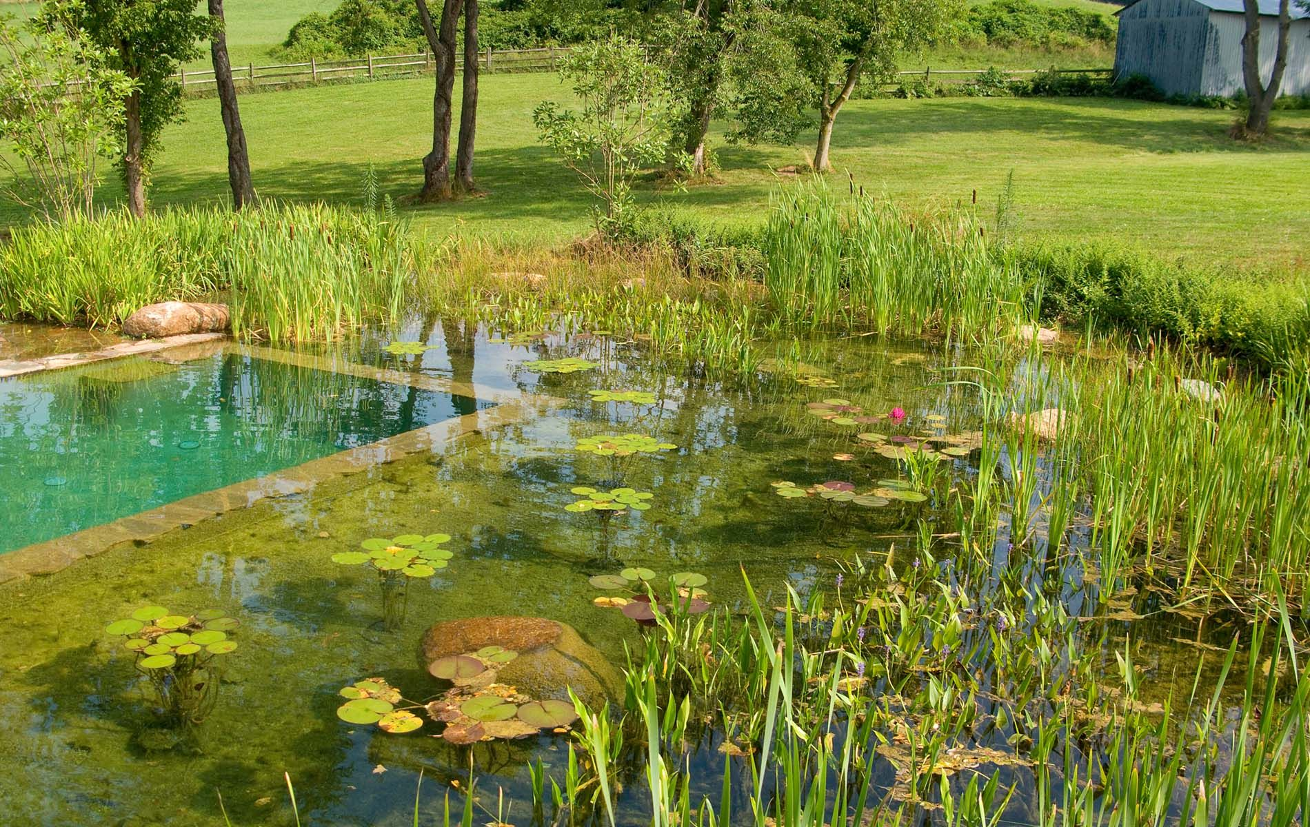 Building a natural swimming pool - A Natural Swimming Pool Instead Of Dumping Loads Of Chemicals Into Pool Water Can Create An Organic Piece Of Art That Is To Say Build A Pool Which Can