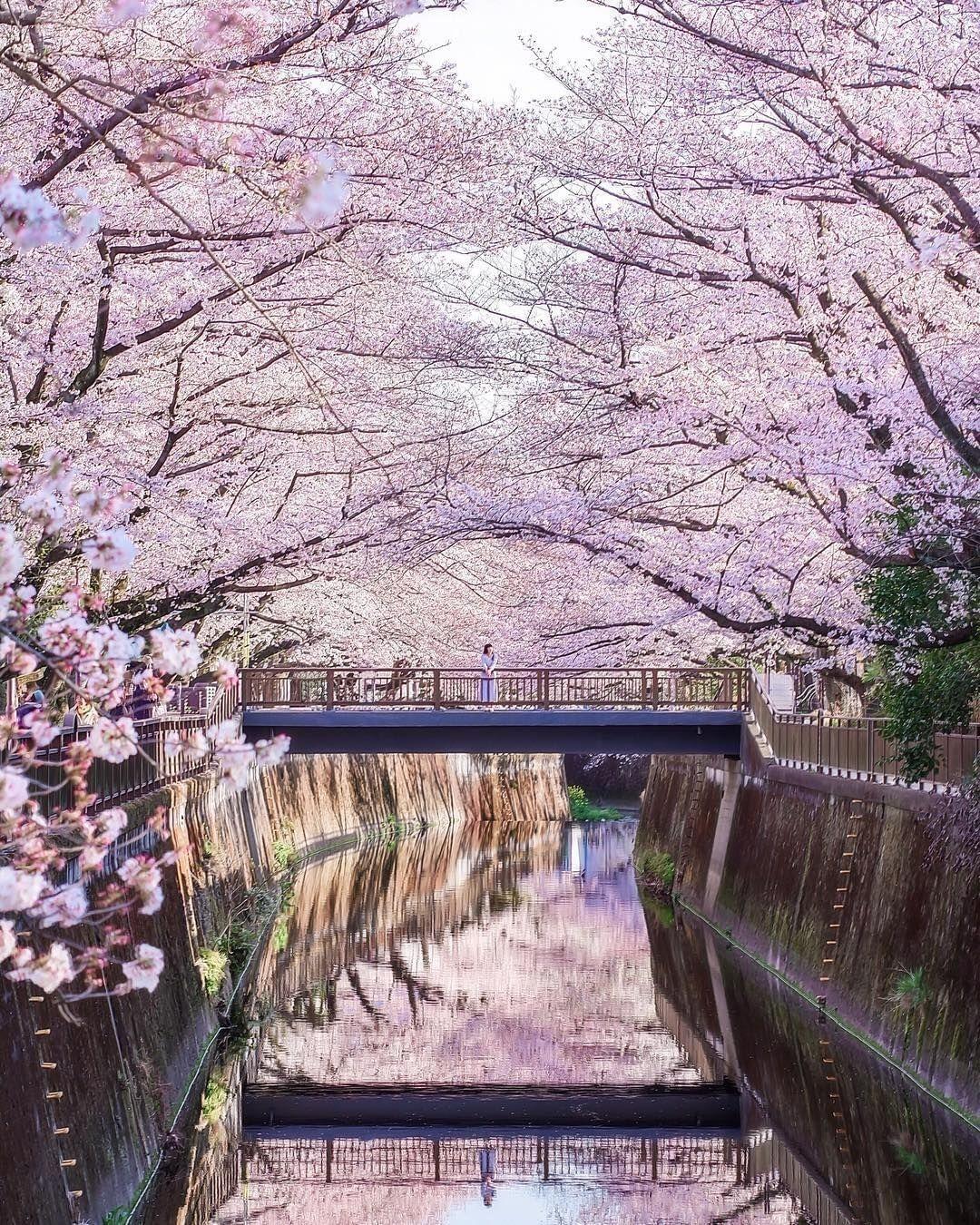 Meguro River In 2021 Japan Tokyo Japan Guide
