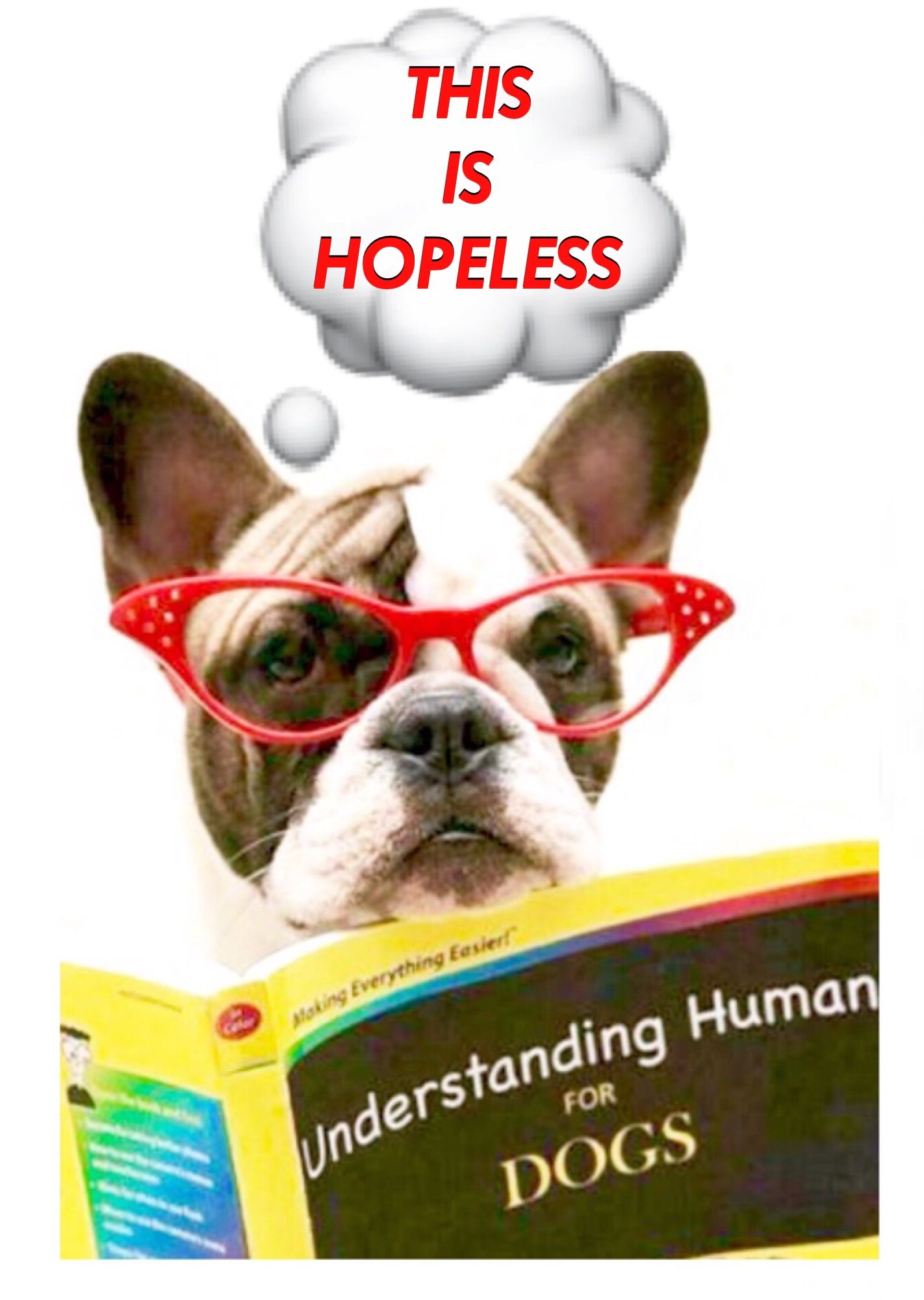 """'Understanding Humans', for Dogs, """"This Will Never Work""""... """"This is Hopeless""""... """"Not Gonna Happen"""", Funny French Bulldog❤"""
