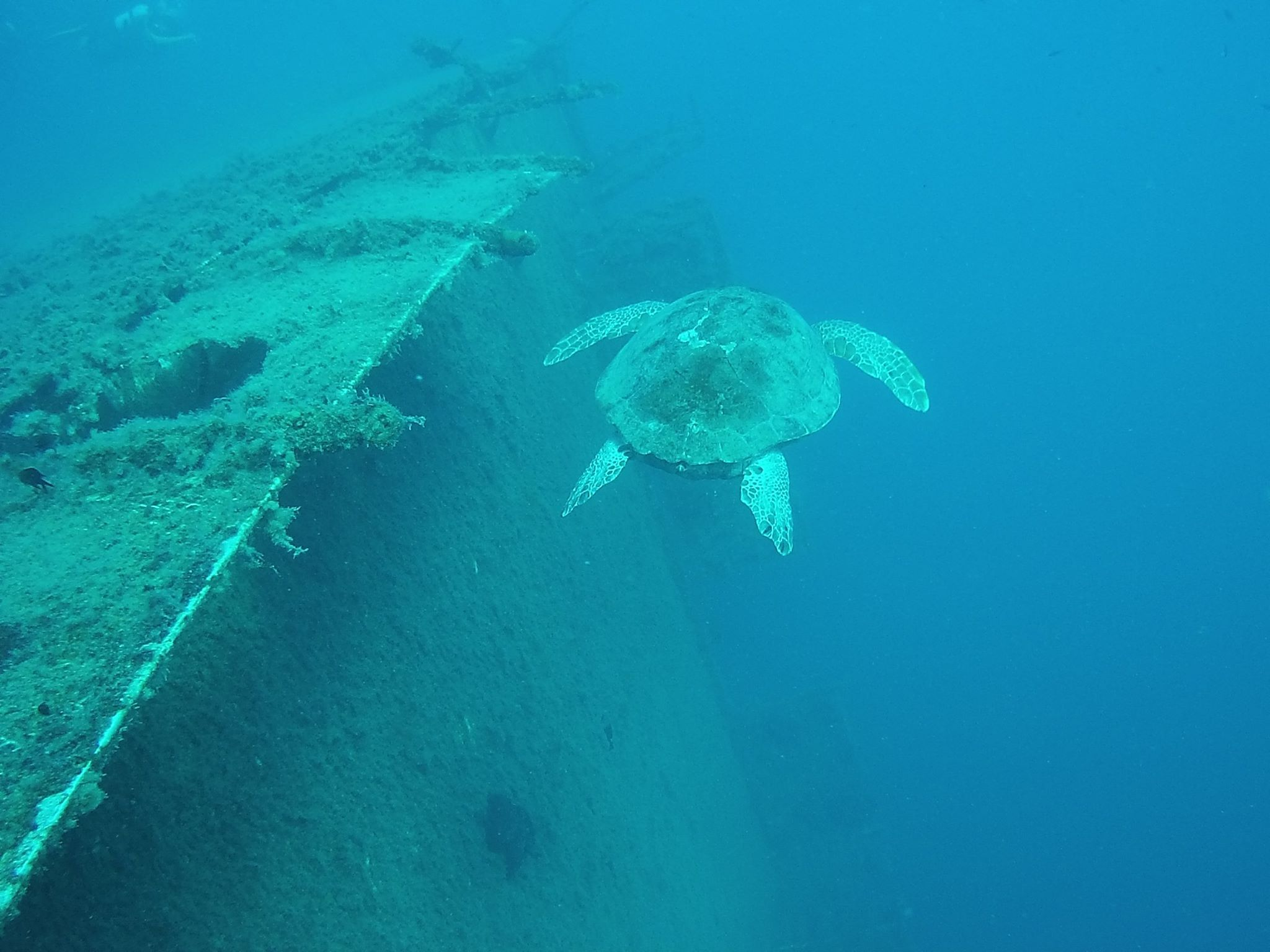 Pin By Anna Mathe On Zenobia Wreck Larnaca Cyprus