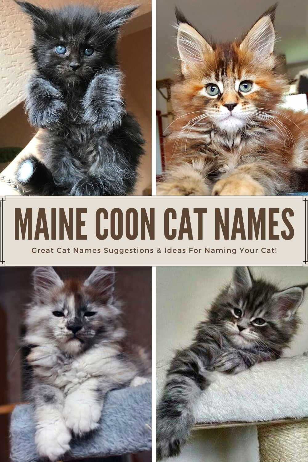 Top 29 Awesome Maine Coon Cat Names Ideas