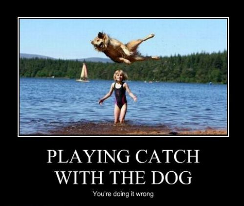playing catch with the dog