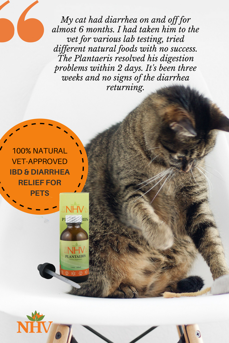 Plantaeris For Cats Cat Diarrhea Cats Natural Pet
