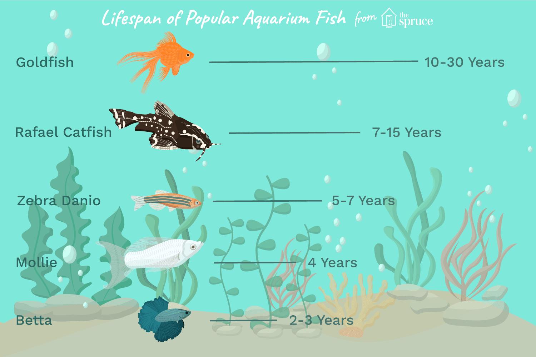 Different Fish Lifespans According To Species And Aquarium Conditions Aquarium Fish Fresh Water Fish Tank Pet Fish
