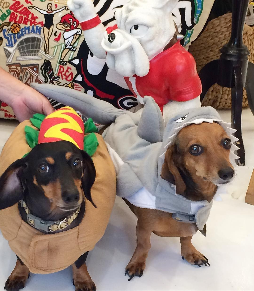 Happy Halloween From Our Shark And Hotdog The Tf Girls Hope You