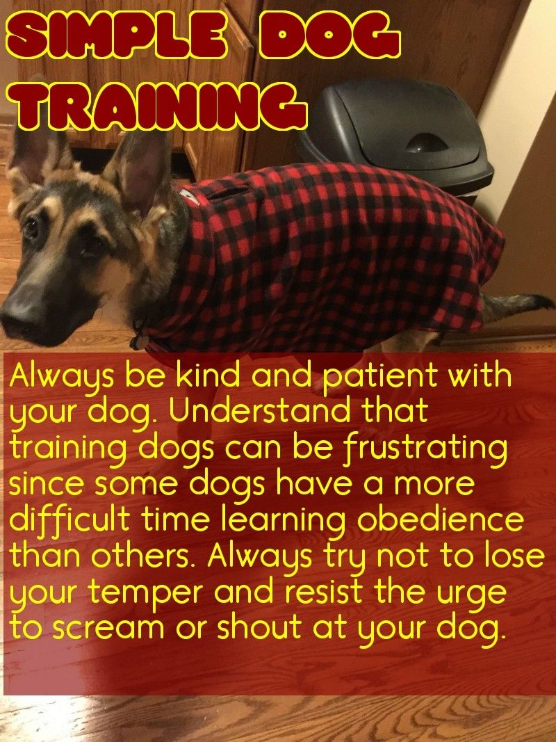 Are you looking for good tips about dogs check this out