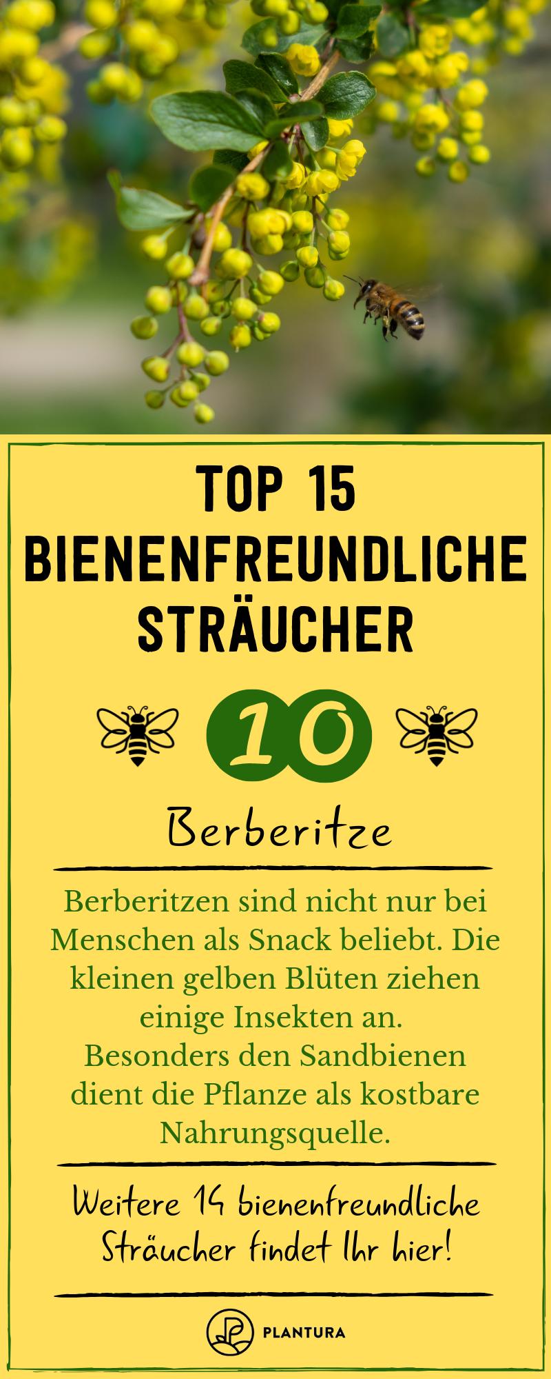 Bienenfreundliche Straucher Top 15 Bienenstraucher Bienenfreundliche Straucher Berberitze Straucher Garten