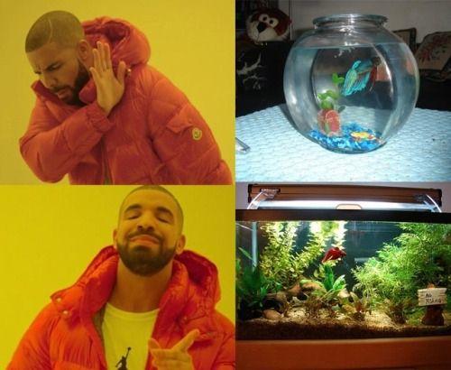 Fish sucks penis