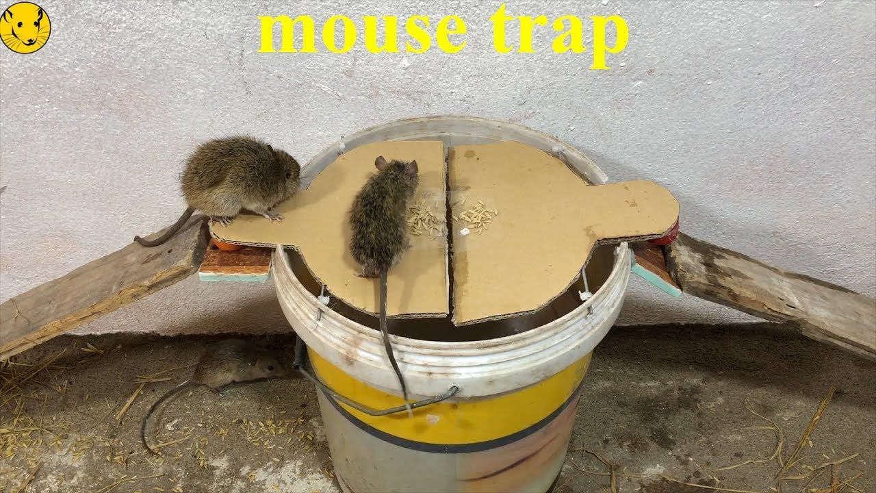 How To Get A Mouse Off Of A Sticky Trap
