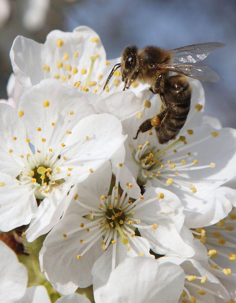 пчелы бетоне