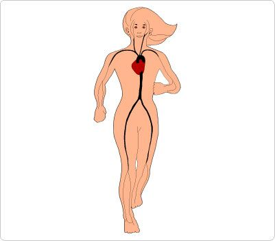 Clip Art Human Body Clipart 1000 images about human body clip art on pinterest circulatory system biology and medical