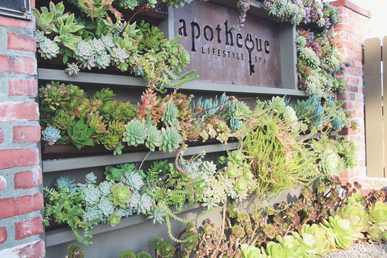 Succulent Cafe Oceanside: A Living Masterpiece   Gardening ...