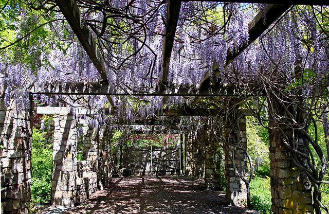 Under The Cross Estate Gardens Pergola