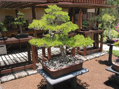 bonsai garden Garden Design Bonsai Garden Garden Layouts