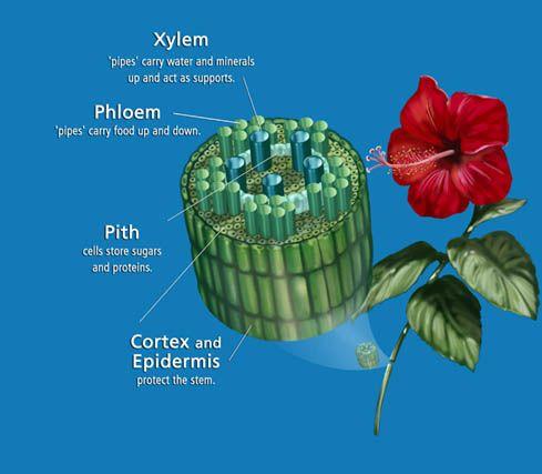 Pin On Plant Biology