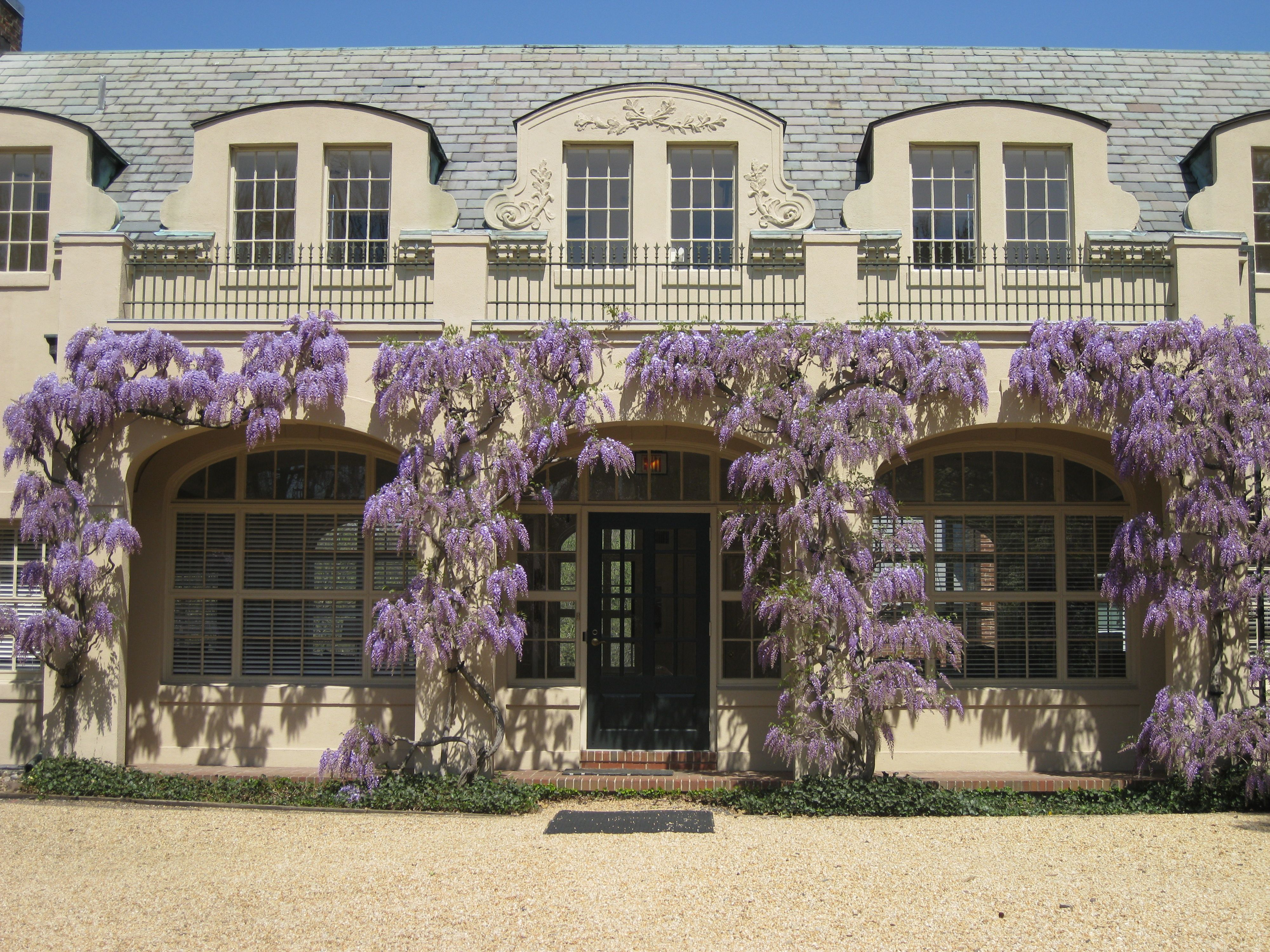 What S Blooming At D O On Wordpress Com Wisteria House Styles House Inspiration