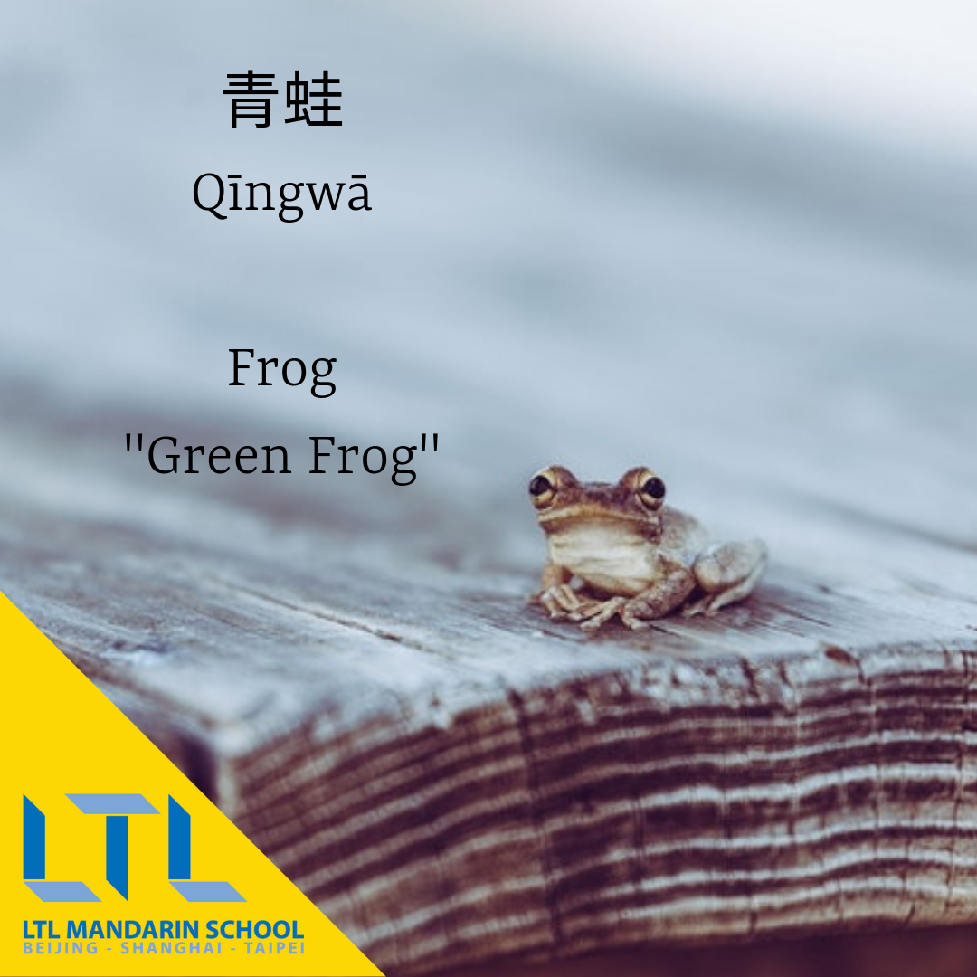Frog In Chinese
