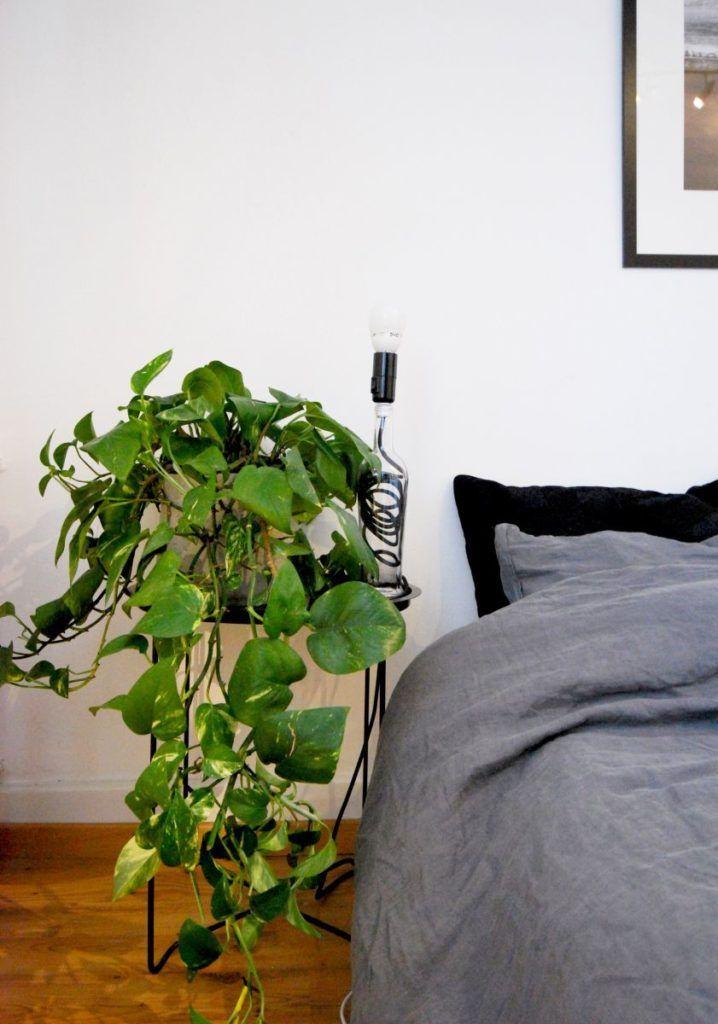 Zimmerpflanzen: Blickfang & Luftreiniger in einem #pflanzenimschlafzimmer Pflanze im Schlafzimmer: Efeutute #pflanzenimschlafzimmer