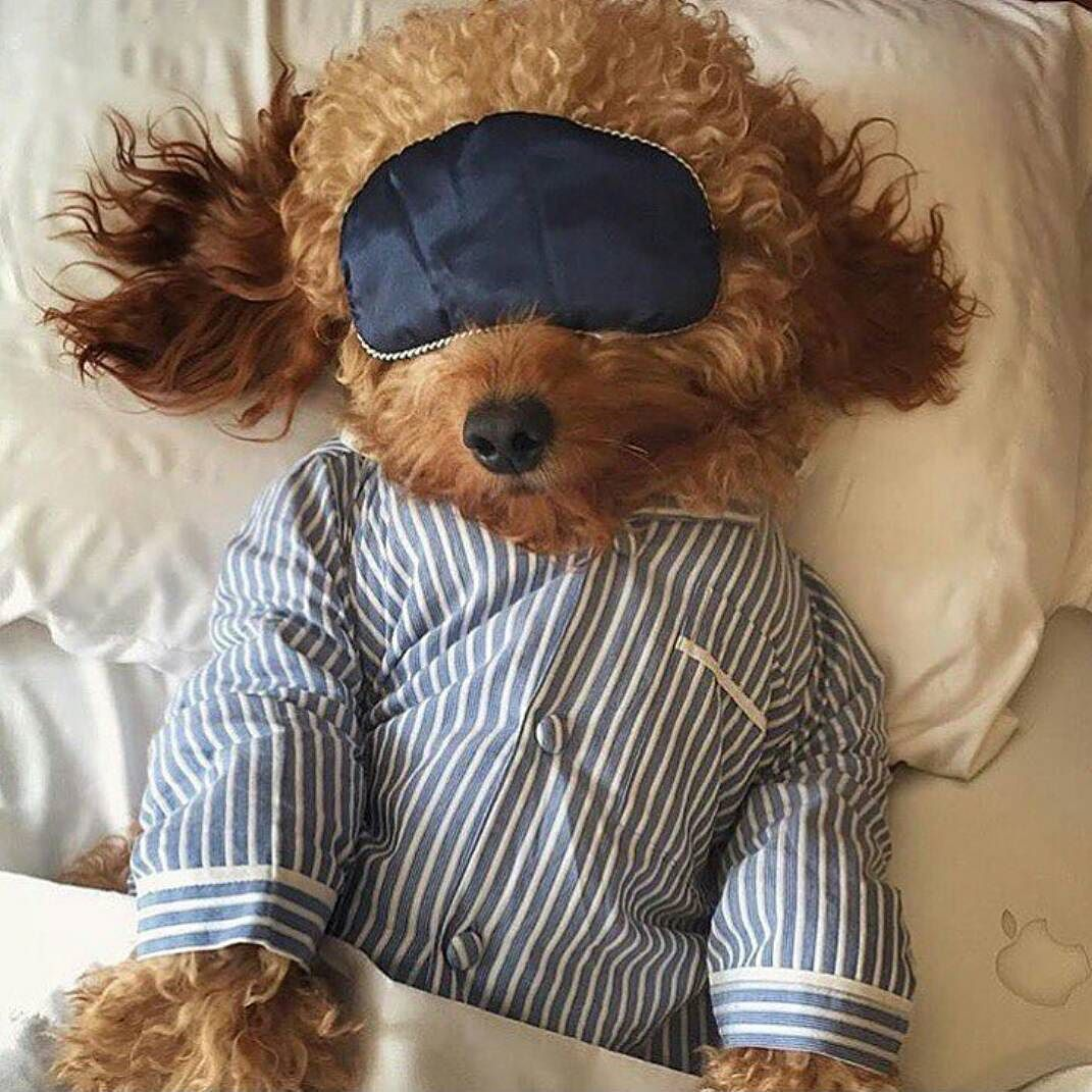 Good Night Sweet Dream Iyi Geceler Amp Tatl Ruyalar